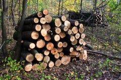 Legname ordinato per legna da ardere Fotografia Stock