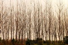 legno Fotografie Stock Libere da Diritti