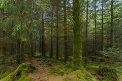 legno Fotografie Stock