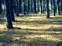 legno Immagini Stock