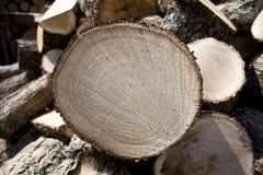 Legno affettato del fuoco della quercia fotografia stock libera da diritti