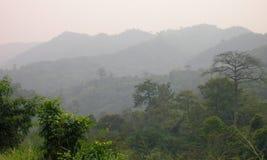 Legno africano, palma Immagini Stock
