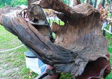 Legno asciutto dell'albero in varia arte di forme meravigliosamente esibita in molla del congresso Fotografia Stock