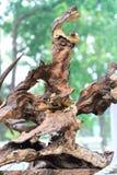 Legno asciutto dell'albero in varia arte di forme meravigliosamente esibita in molla del congresso Immagine Stock Libera da Diritti