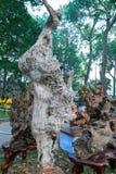 Legno asciutto dell'albero in varia arte di forme meravigliosamente esibita in molla del congresso Fotografie Stock