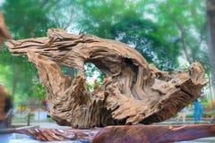 Legno asciutto dell'albero in varia arte di forme meravigliosamente esibita in molla del congresso Fotografia Stock Libera da Diritti