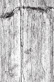 Legno asciutto verticale Fotografie Stock