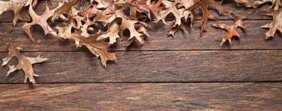 Legno Autumn Banner Background delle foglie Fotografia Stock Libera da Diritti