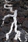 Legno bianco su lava Fotografia Stock Libera da Diritti