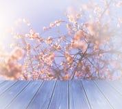 Legno blu di prospettiva vuota sopra gli alberi vaghi e di fioriture con il fondo del bokeh, per il montaggio dell'esposizione de immagini stock