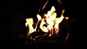 Legno bruciante nel fuoco Fuoco del campo nella notte Parete delle fiamme Alto vicino dell'incendio forestale video d archivio