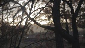 Legno in California dopo fuoco stock footage