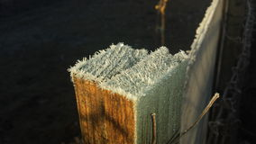 Legno congelato Fotografia Stock Libera da Diritti