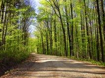 legno conifero dell'Ucraina del percorso di foresta dell'Europa orientale fotografie stock libere da diritti