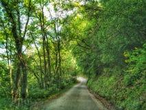 legno conifero dell'Ucraina del percorso di foresta dell'Europa orientale Fotografie Stock