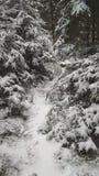 legno conifero dell'Ucraina del percorso di foresta dell'Europa orientale fotografia stock