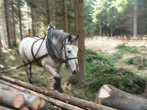 Legno d'avvicinamento del cavallo fotografie stock libere da diritti