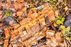 Legno decomposto Fotografia Stock Libera da Diritti