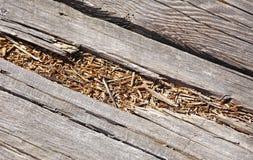 Legno decomposto sul percorso del sentiero costiero fotografia stock