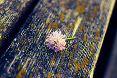 Legno del fiore Fotografie Stock Libere da Diritti