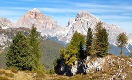 Legno del larice e Le Tofane Gruppe, Dolomiti, Italia Immagini Stock