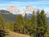 Legno del larice e Le Tofane Gruppe, Dolomiti, Italia Immagine Stock