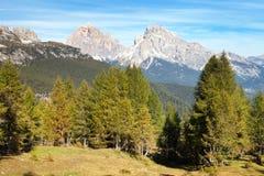 Legno del larice e Le Tofane Gruppe, Dolomiti, Italia Fotografie Stock Libere da Diritti