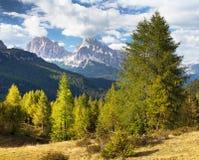 Legno del larice e Le Tofane Gruppe, Dolomiti, Italia Immagine Stock Libera da Diritti