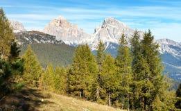 Legno del larice e Le Tofane Gruppe, Dolomiti, Italia Immagini Stock Libere da Diritti