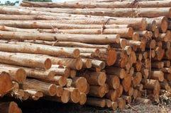 legno del mucchio Immagine Stock Libera da Diritti