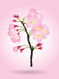 Legno del nero del fiore di ciliegia del cespuglio dell'albero di sakura di rosa della piena fioritura isolato su fondo rosa royalty illustrazione gratis