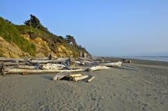 Legno del nord della deriva della spiaggia di California fotografia stock libera da diritti