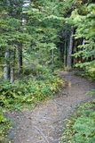legno del percorso fotografia stock
