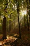 Legno del raggio di Sun fotografia stock libera da diritti