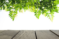 Legno del terrazzo di prospettiva e permesso verde per il fondo di uso Immagini Stock