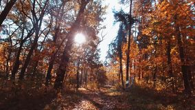 legno dell'albero forestale della depressione di volo Chiarore di Sun Priorità bassa della natura stock footage