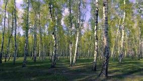 legno dell'albero forestale della depressione di volo Chiarore di Sun Priorità bassa della natura video d archivio