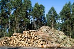 Legno dell'eucalyptus Fotografie Stock Libere da Diritti