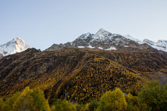 Legno dell'oro e montagne innevate Fotografia Stock Libera da Diritti