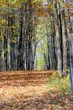 legno della camminata Immagini Stock Libere da Diritti