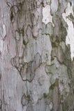 Legno della corteccia di struttura Fotografia Stock Libera da Diritti
