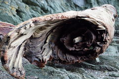 Legno della deriva dell'albero da acqua Fotografie Stock