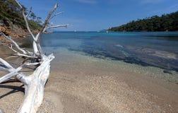 Legno della direzione su una spiaggia Fotografia Stock Libera da Diritti