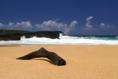 Legno della direzione sulla spiaggia Immagini Stock