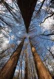 Legno della natura di occhiata dell'albero grandangolare in foresta Immagine Stock