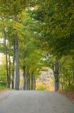 legno della strada della ghiaia di autunno Fotografie Stock Libere da Diritti