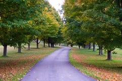 legno della strada della ghiaia di autunno Immagine Stock