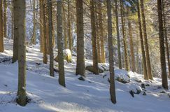 Legno dello Snowy Fotografia Stock Libera da Diritti