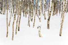Legno dello Snowy fotografia stock