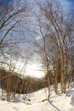 Legno dello Snowy della betulla fotografie stock libere da diritti